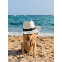Beach Dog in Hat